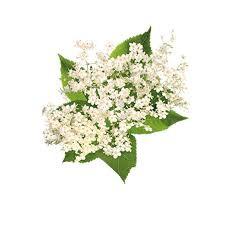 BSA001F112 Elderflower Fizz